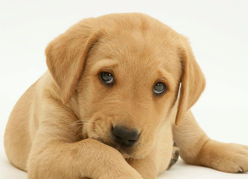 Fun Facts About Dogs You Did Not Know