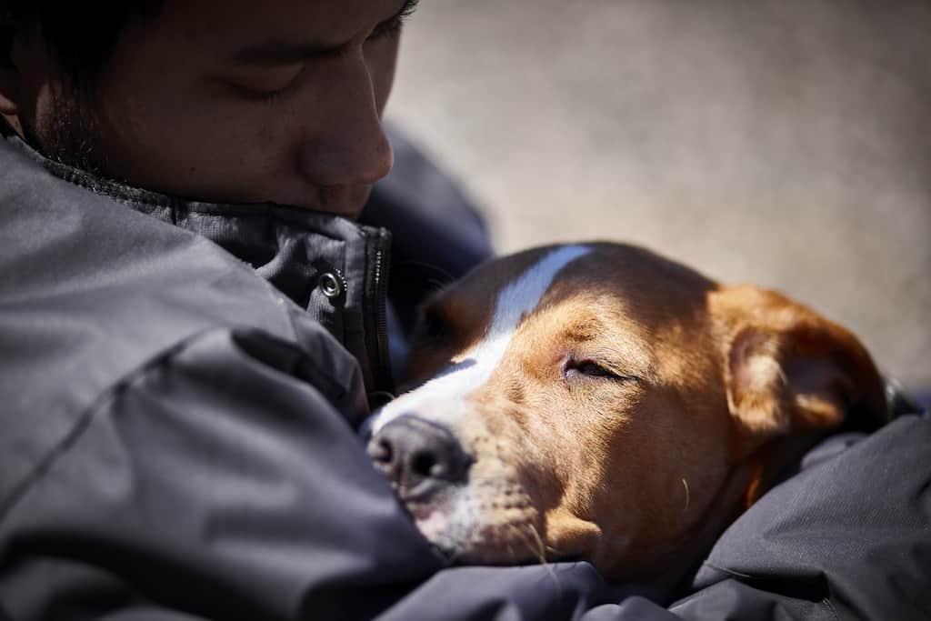 Unbelievable Health Benefits Of Pets