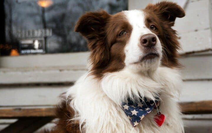Hard-Working Dogs With Full-Time Jobs