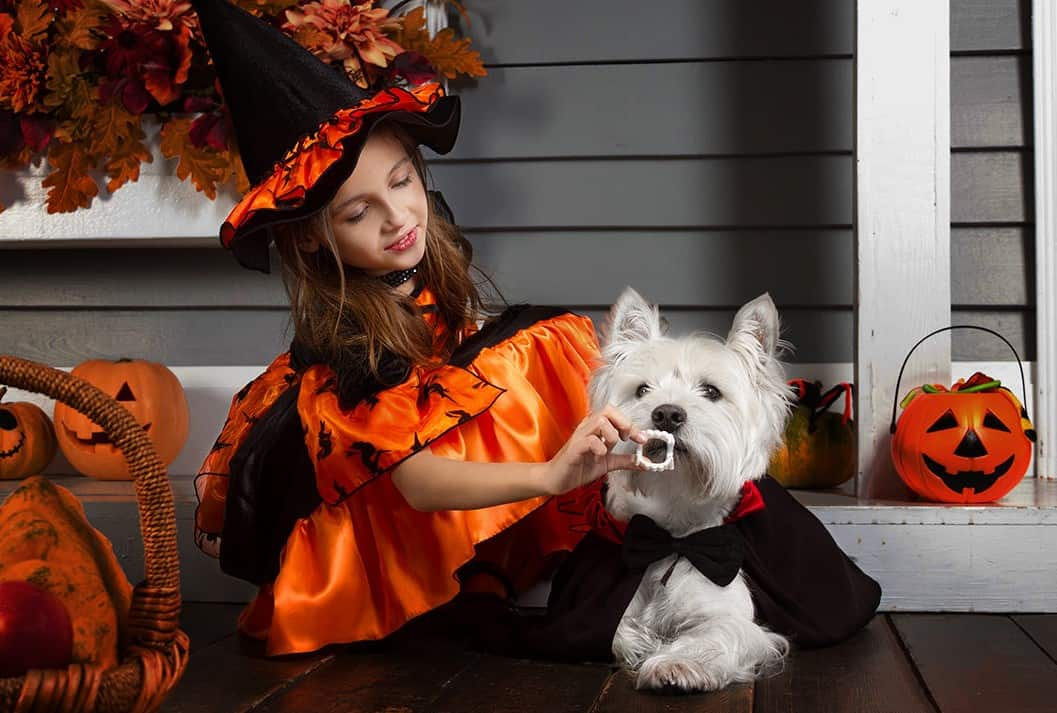Horrifyingly Adorable Halloween Costumes For Pets