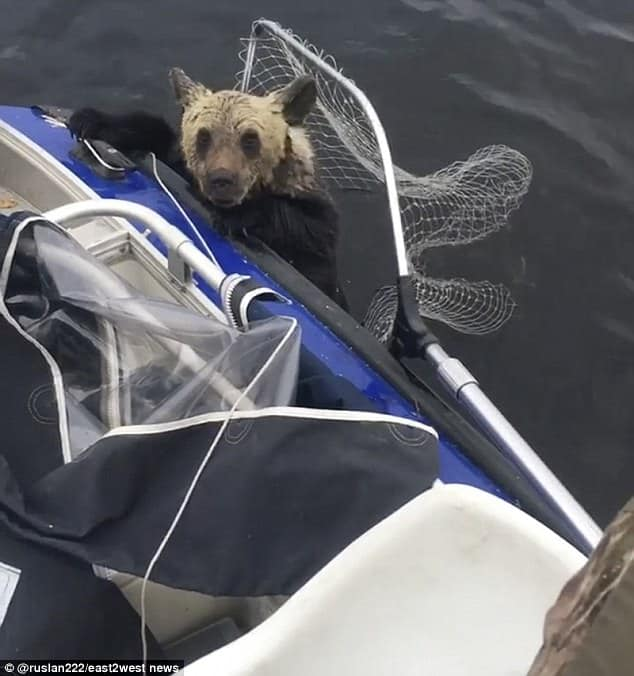 Fishermen See Abandoned Baby Bears And Do The Unthinkable