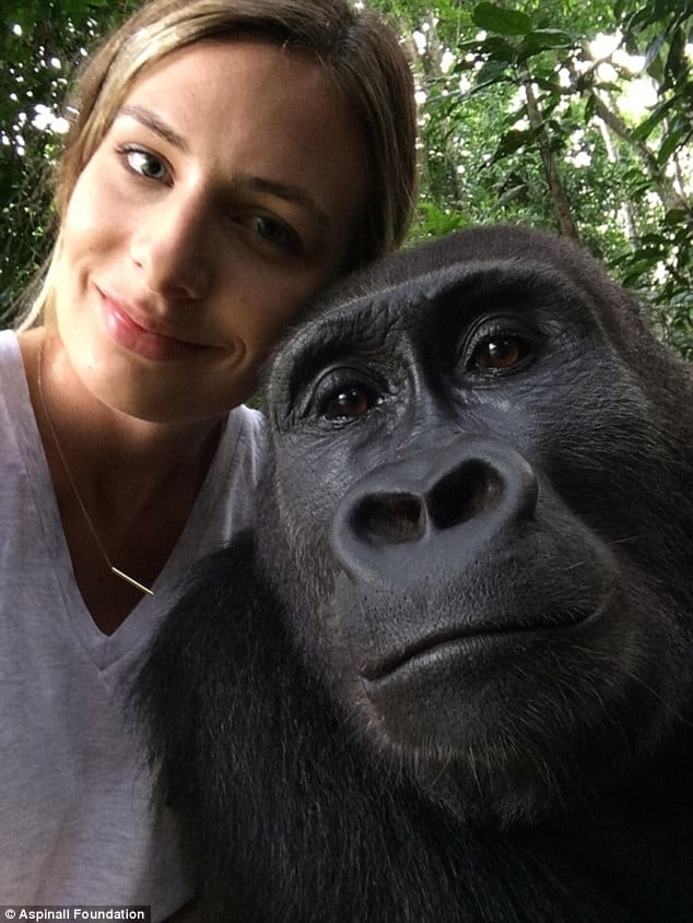 Gorillas Reunite With Girl – You Won't Believe Their Reaction