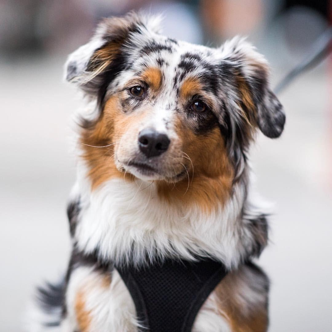 Here Are All Dog Breeds That Live The Longest