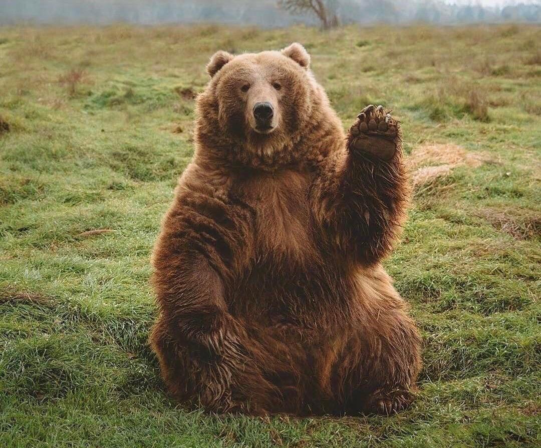 Bear Waves Back At Zoo Visitors
