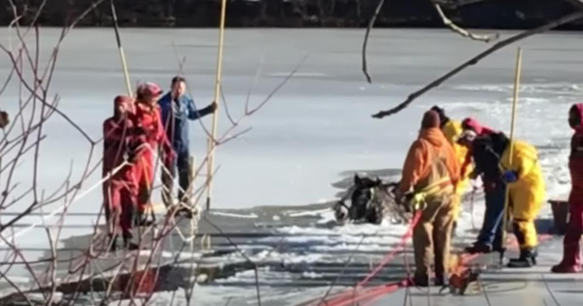Farmers See Two Horses Trapped In Ice And Do The Unthinkable