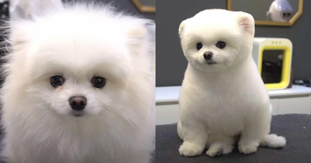 People Who Thought They Picked Up The Wrong Animal AFter A Trip To The Groomer